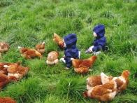 Bébés avec poules au glamping Un lit au Pré à La Ferme de la Moricière à Sartilly en Basse-Normandie