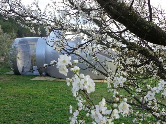 Bulle en pleine nature au glamping Les Chambres Bulles du Château Belvize à Bize Minervois en Languedoc-Roussillon