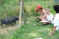 Les animaux de la ferme au glamping Simply Canvas à Saint-Jean-de-Duras en Aquitaine